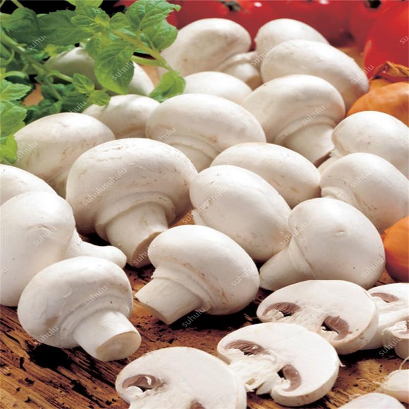 100 Pcs/bag Mushroom Bonsai Succlent Plant Edible Health Non-GMO Vegetable Mushroom Garden For Happy Farm