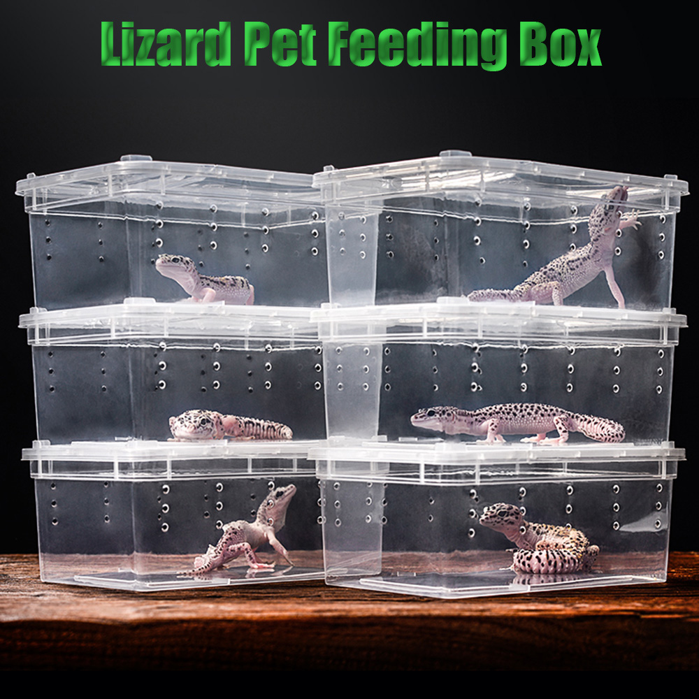 Transparent Plastic Box Insect Reptile Terrarium Clear Breeding Live Food Feeding Box Snakes Lizard Frogs House Pet Supplies