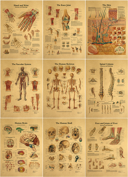 The human body muscular system Structure HD Vintage Paper Poster Bar Home Decor Retro Kraft Paper Painting 42x30cm image