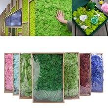 Planta Artificial de musgo de vida eterna, accesorios de micropaisajismo para jardín, decoración para el hogar, Material de flores DIY, 40g
