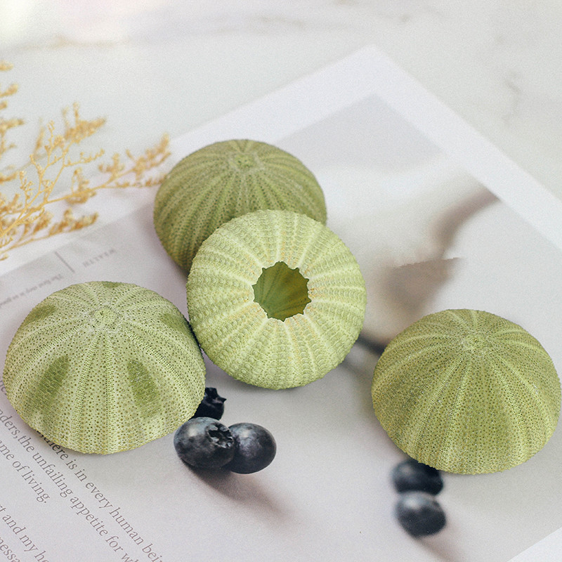 Neue 10 teile/los Natürliche Kleine grüne Seeigel Natürliche Shell Muschel Ozean Hochzeit Schmücken Hause Zubehör meer sear natürliche handwerk