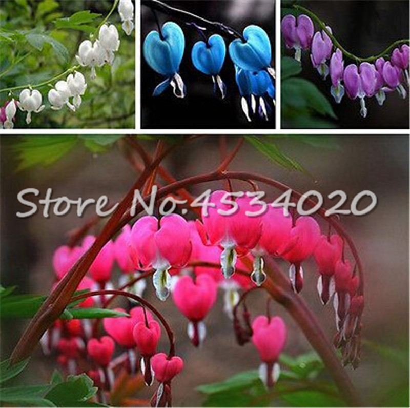 100 Pcs Bell Orchid Flower Bonsai,Bleeding Heart Classic Cottage Garden Plant,heart-shaped Flowers,bonsai Plant For Courtyard