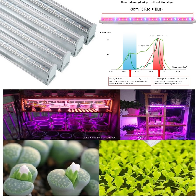 T5 Tube LED Red And Blue Phyto Lamps5W 10W 15W 20W 25W Led Grow Light 110v 220v LED Grow Light Hydroponic Plant