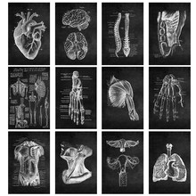 Human Anatomy Canvas Paintings and Posters, Black White Musculoskeletal System Wall Art Picture Decoration Modern Home Office