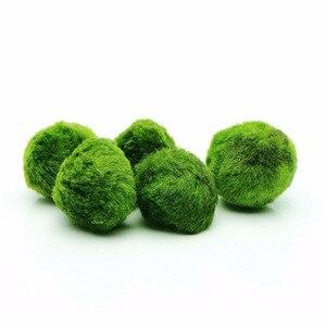 4-5cm Marimo Moss Ball Green F