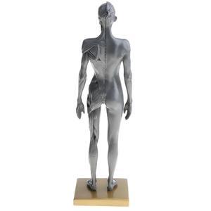 Image 4 - Figura de anatomía femenina, modelo anatómico para artistas, dibujo médico gris, esqueleto, suministros de arte