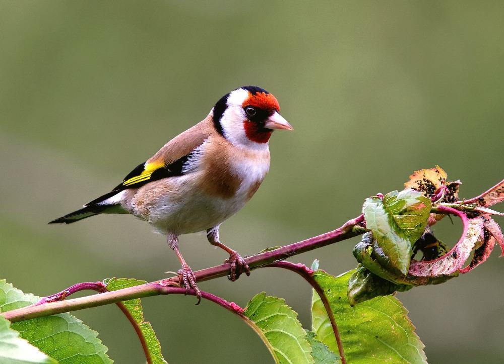 bird-perching-on-branch-561133525-59652f215f9b583f18171e67