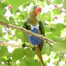 Bird Parrot Flight Suit Pigeons Parakeet Flying Clothes Diapers