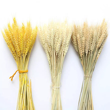 цена на 50pcs/lot Wheat Autumn Decoration Pampas Grass Craft Flowers Dried Flowers for Wedding Decoration Wheat Artificial Plants