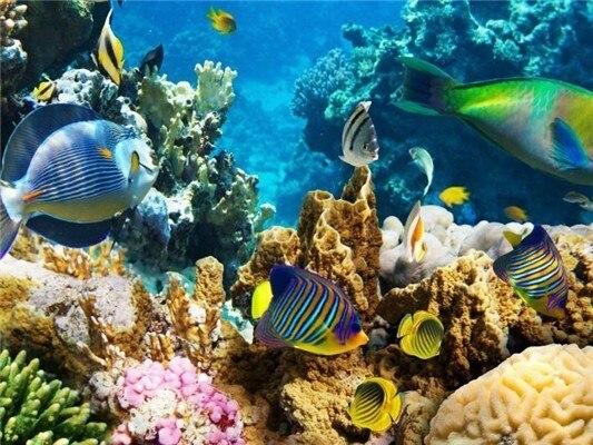 Подводный Мир Обои На Стол