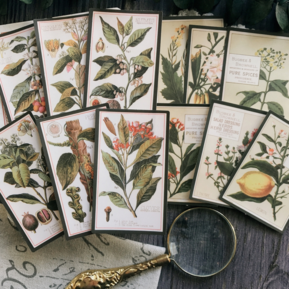 8Pcs/Set Vintage Plants English Letters Sticker DIY Craft Scrapbooking Album Junk Journal Planner Decorative Stickers