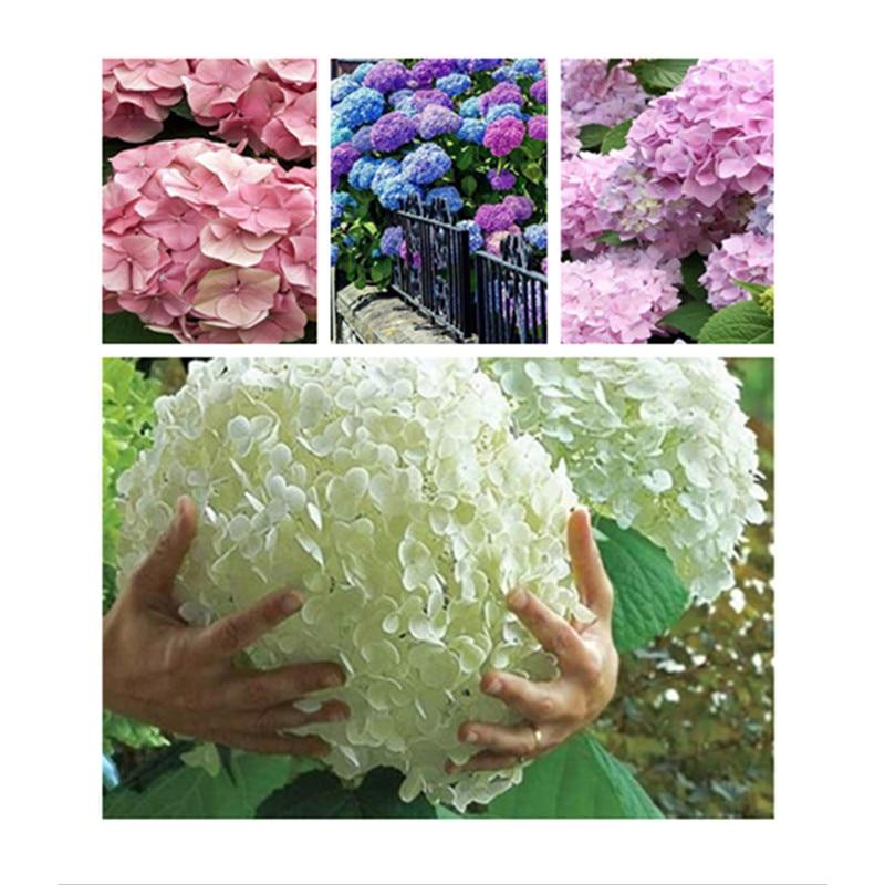 Plant Flowers Bath Salts Rose Big Hydrangea Essence 90Pcs AN-ZZ13-90