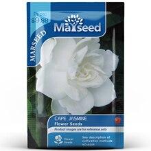 American Heirloom MARSEED Cape Jasmine Flower  Seedsplants Seedling Garden Outdoor