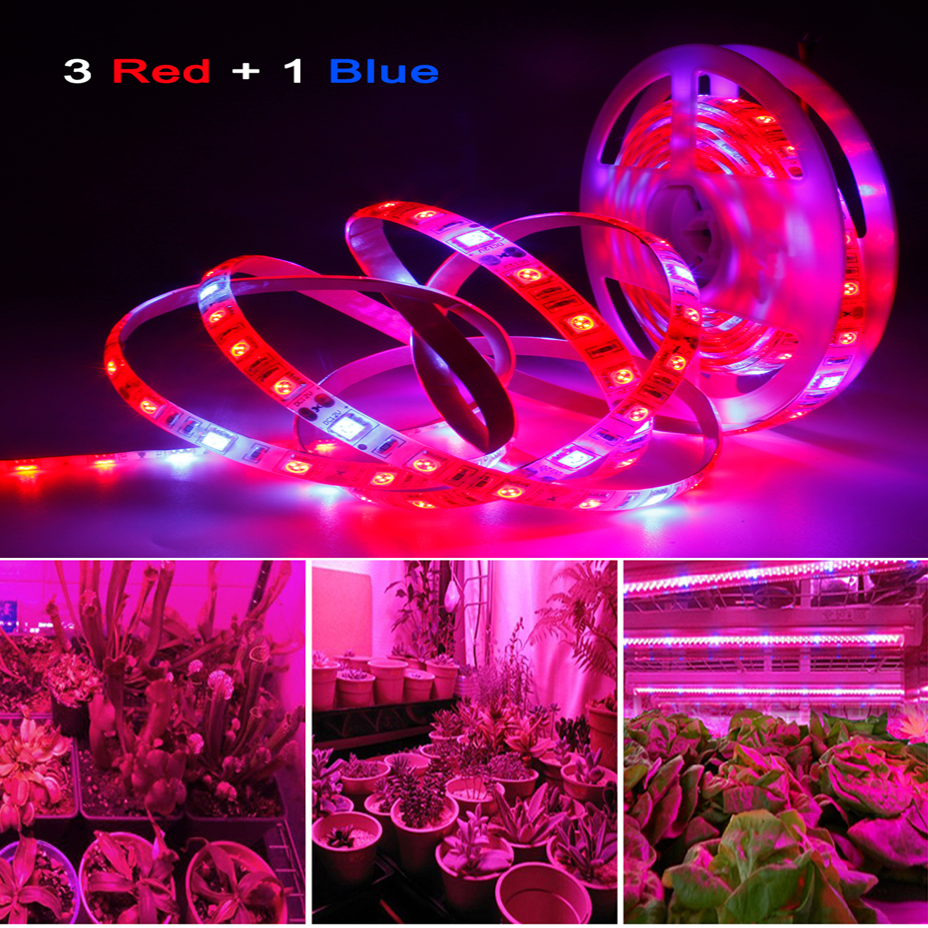 DC 12V LED Grow Light Full Spectrum LED Strip Lights 1m 2m 3m 4m 5m SMD5050 LED Phyto Lamps For Greenhouse Hydroponic Plant