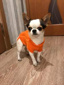 Sweater Jacket Clothing Costume Cat-Vest Dogs-Coat Pet-Dog Chihuahua Pure-Shirt Large