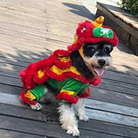 Unique Chinese Style New Year Pet Makeover Funny Clothes Dragon Dance Dog Festival Red Lucky Cosplay Costume