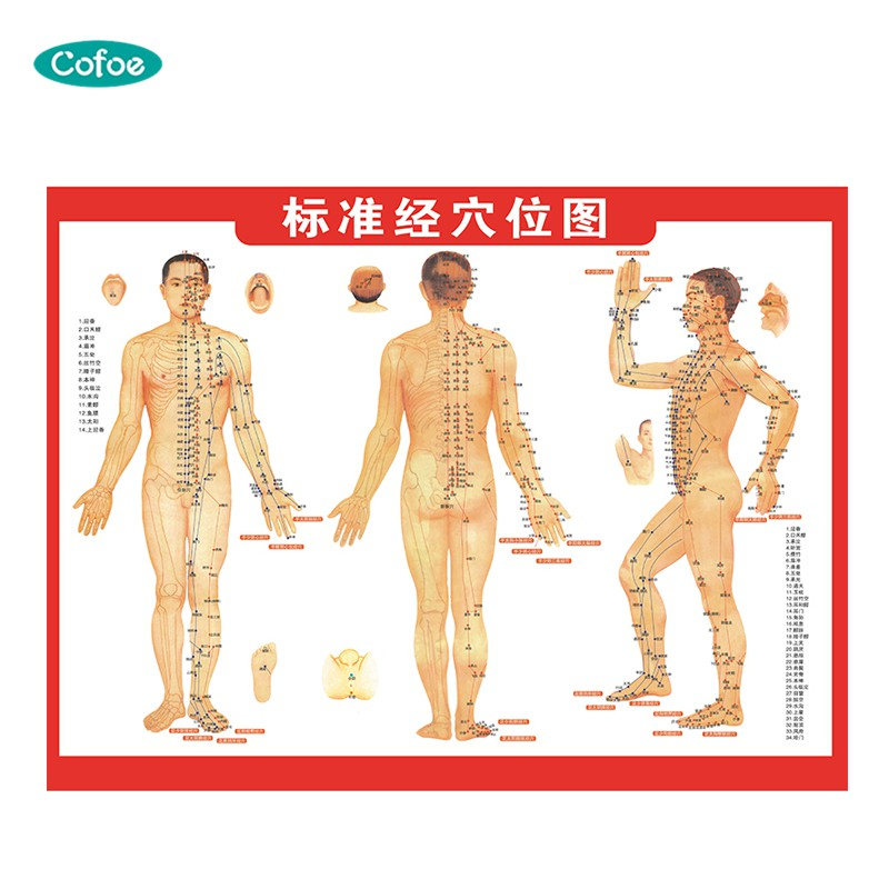 Cofoe Standard Human Acupoint Map Acupuncture Points Of TCM Meridians In Health Care  For Whole Body Massage Acupuncture Chinese