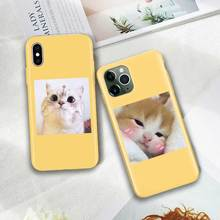 Candy Colors Cover Case for iPhone 11 Pro XS MAX X XR SE 2020 8 7 6 6S Plus Yellow Phone Silicone Soft Thin Shell Cute Cat