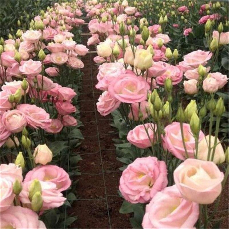 Plant Bath Salts 100Pcs Fresh Flower Essence AN-ZZ24-100