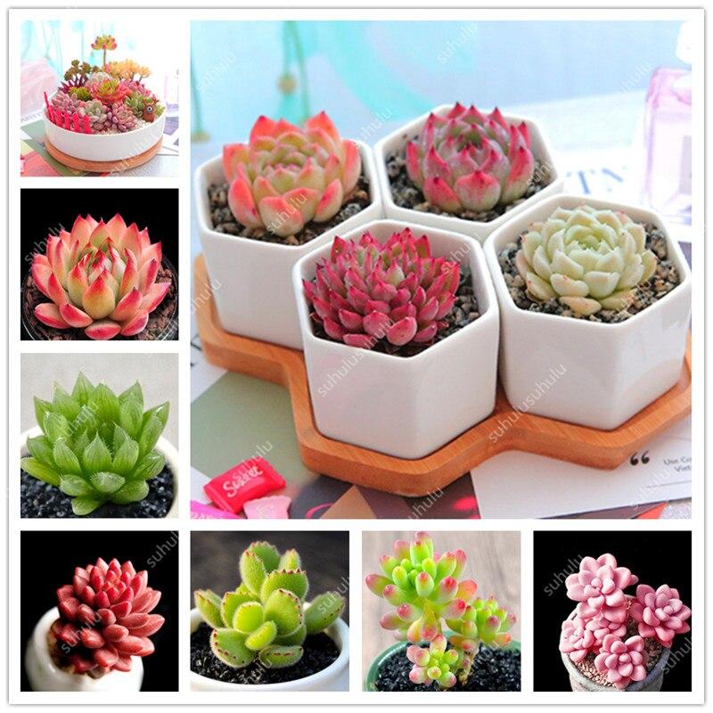 300 Pcs/pack Rare Mix Lithops Flores Living Stones Succulent Cactus Organic Garden Bulk Flower Plantas,bonsai Plant For Balcony