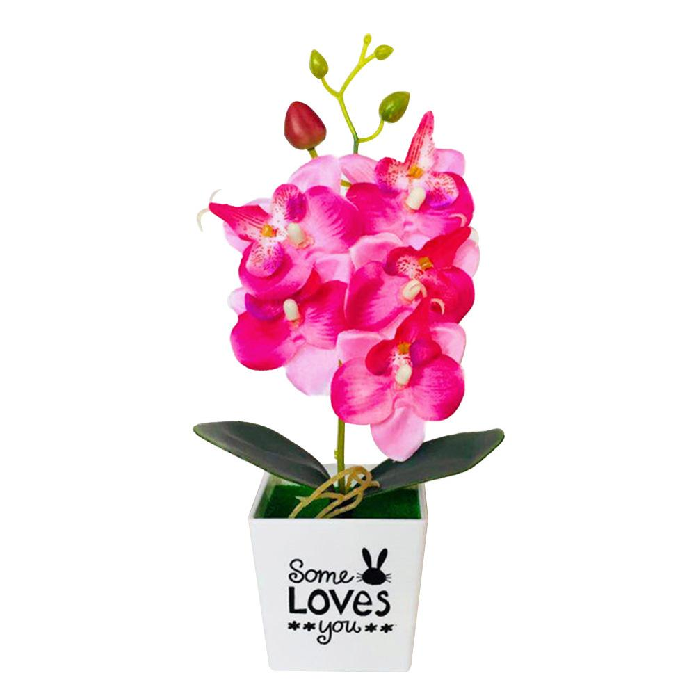Top 10 Most Popular Butterfly Orchid Bonsai Flowers List And Get Free Shipping A885