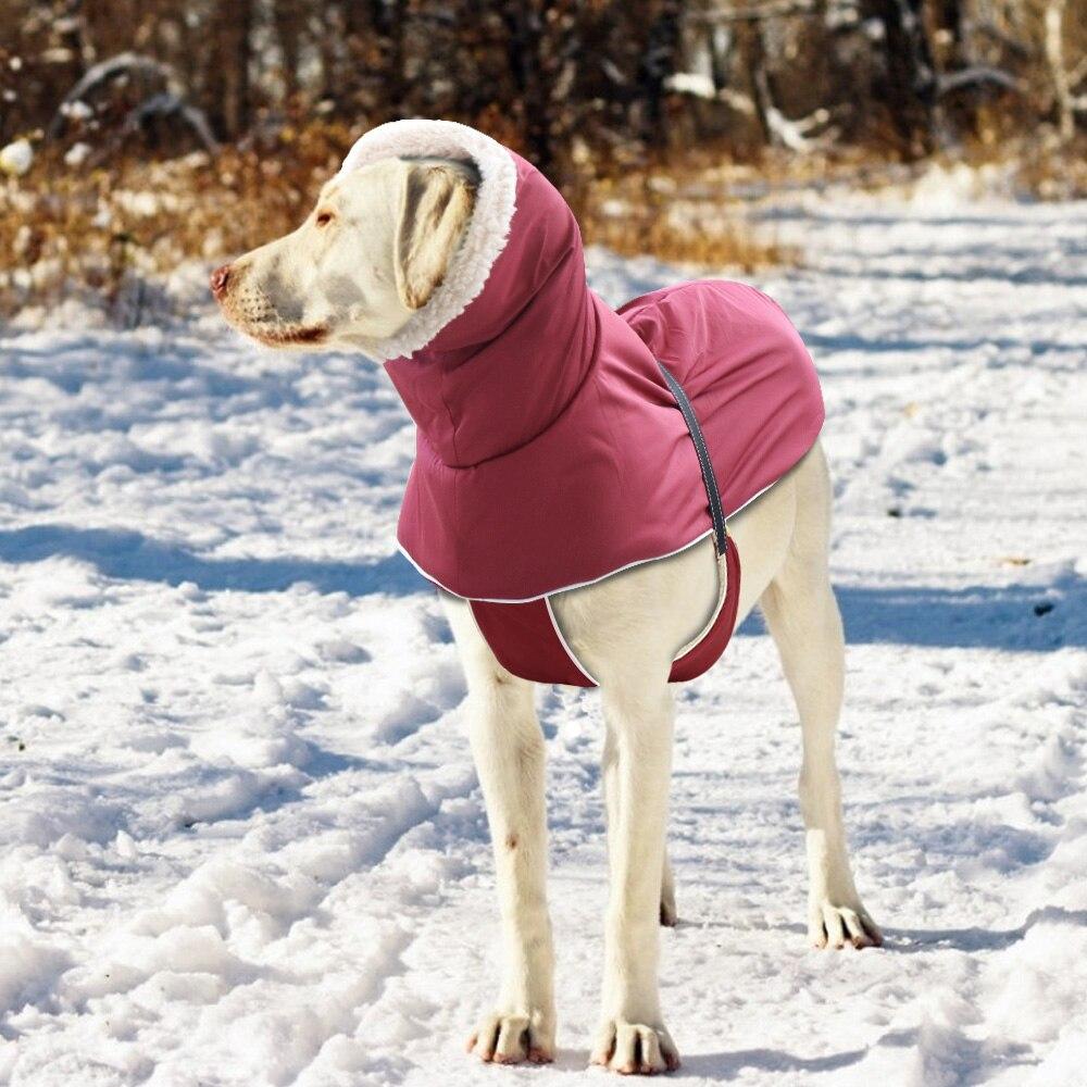 Büyük ırk köpek yağmurluk