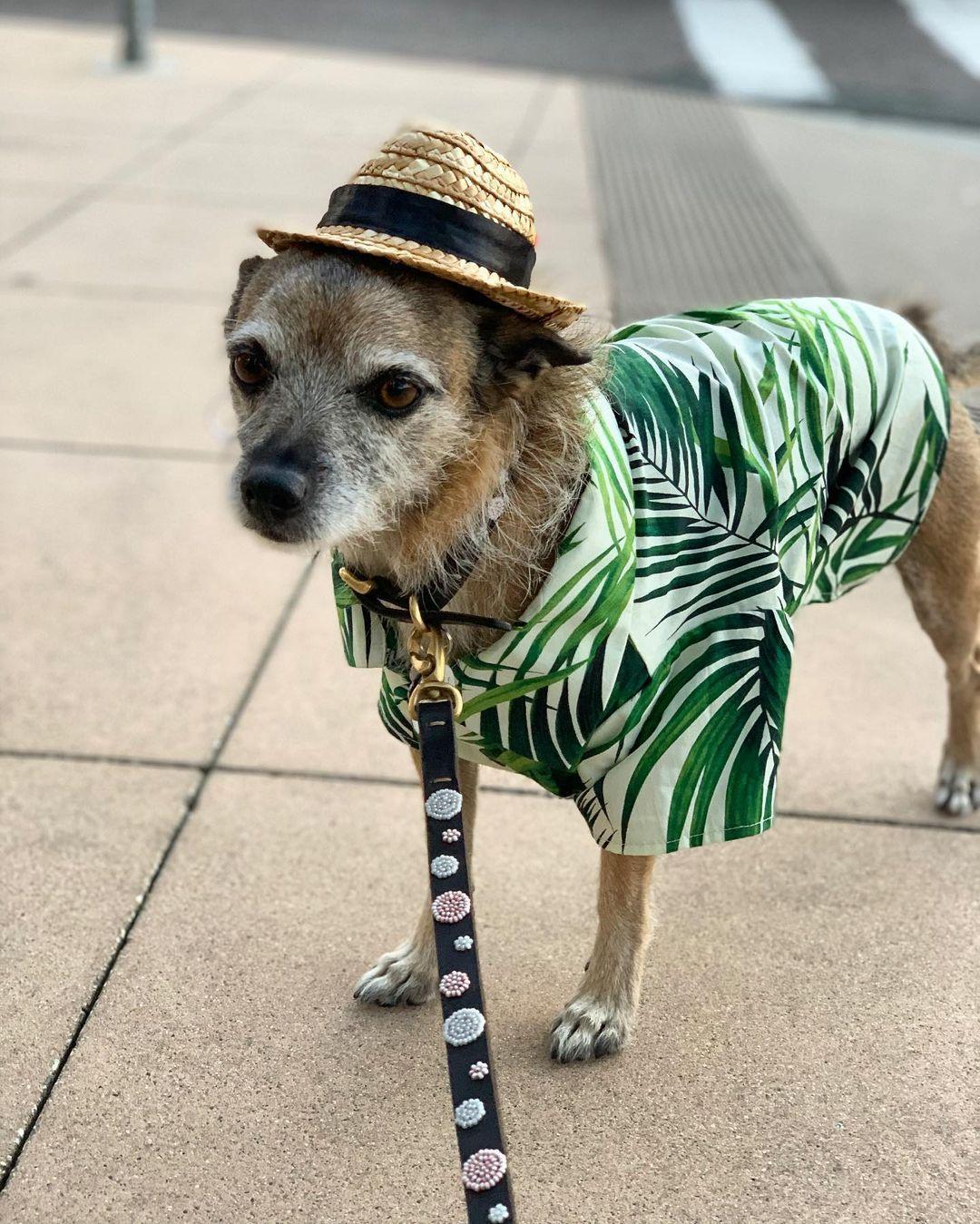 puppy summer clothes