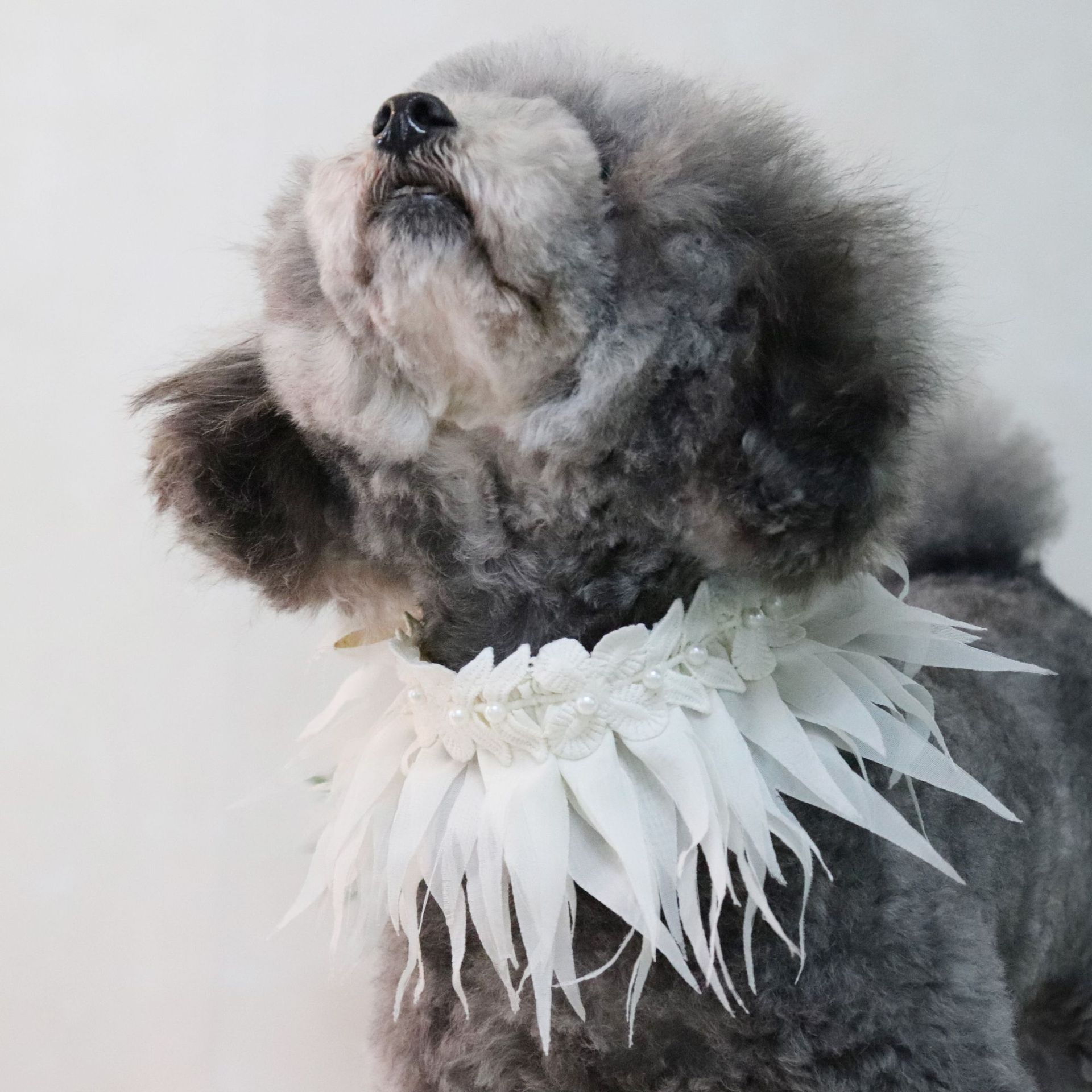 Jin Jie Te New Style Grass Skirt Style Pet Collar Dog Bibs Bib