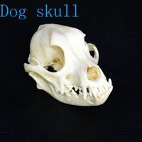 https://ae01.alicdn.com/kf/H5f58c9304543474fa7e8f960f2fc5afay/1pcs-BEAST-Dog-Skull-Study-11-14.jpg