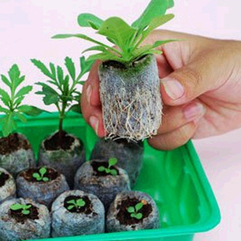 Starter-Pallet Plugs-Seeds Seedling-Soil-Block Bonsai Professional-Tool Jiffy Peat 10pcs title=