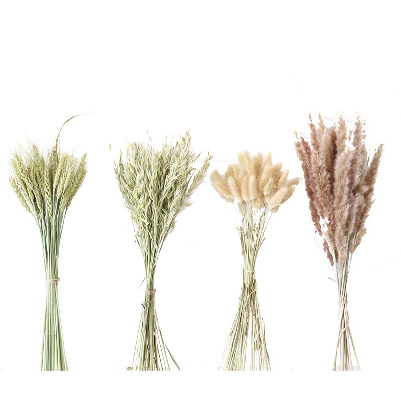 Пшеничный сушеный цветок с кроличьим хвостом, травяной сушеный цветок, утенок, сушеный цветок, реквизит для фотосессии, украшение для гости...