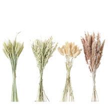 Trigo seco flor coelho cauda grama seca flor de aveia reed seco flor atirar adereços decoração sala estar decoração casa
