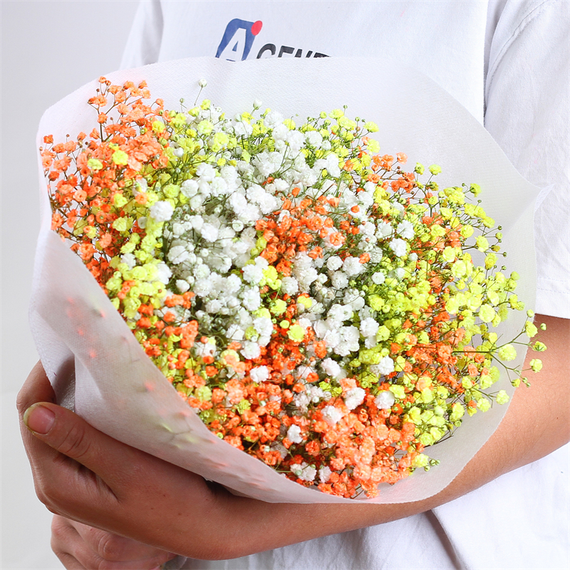 Gypsophila Dried Flowers Preserved Natural Fresh Paniculata Baby's Breath Flower Bouquets Gift for Wedding Decoration Home Decor