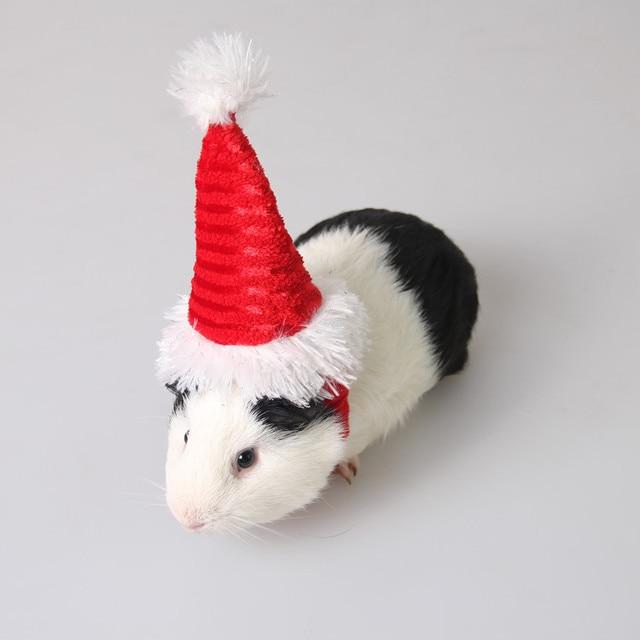 Фото мелкие товары для животных оптовая продажа ежик коврик pigpigman цена