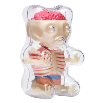 4d Big Bear Transparent Perspective Animal Anatomy Skeleton Bone Puzzle Assembling Toy for Children