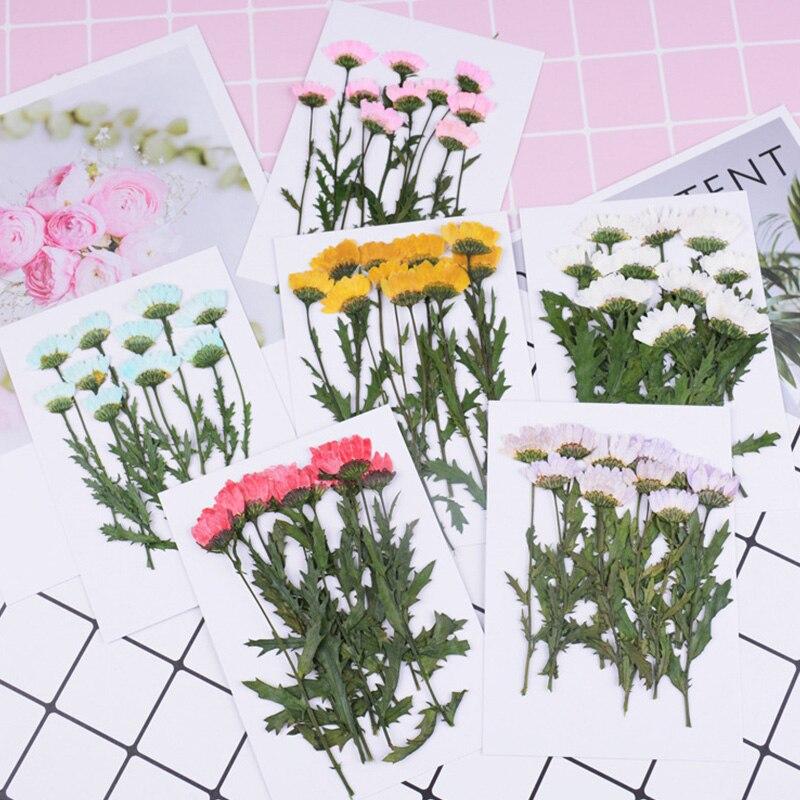 1 сумка, Хрустальный чехол для телефона с рисунком хризантем, высушенным цветком, тиснение, прессованный цветок, капельная аппликация