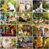 HUACAN Picture By Numbers Animal Cat Drawing On Canvas HandPainted Art Gift DIY Picture By Number Flower Kits Home Decoration
