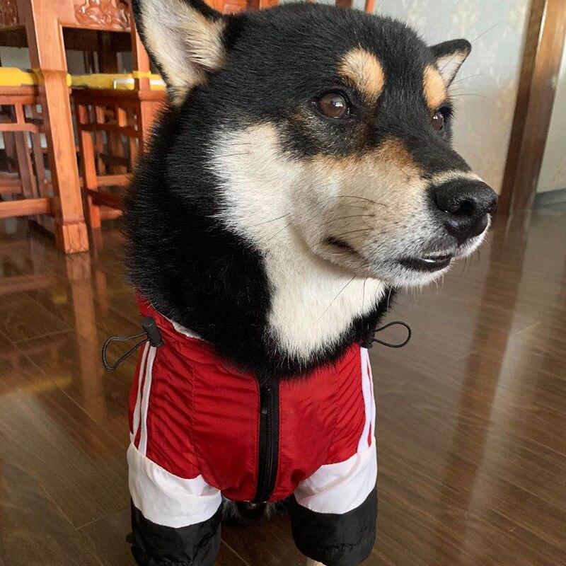 Купить одежда для домашних животных собак французских бульдогов толстовка