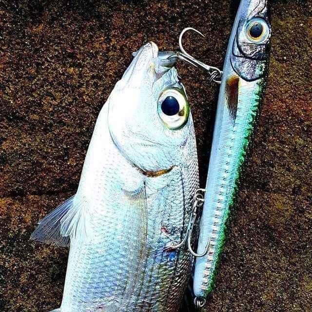 Hunt house ago zargana 150 popper esche per matite esche per matite lunghe cast esca galleggiante per pesca in acqua topwater esca per acqua superiore pesce ghiaccio