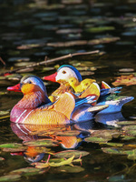 Animal Mandarin Duck Floating Water Decoration Villa Courtyard Pool Garden Decoration Pond Horticultural Resin Sculpture