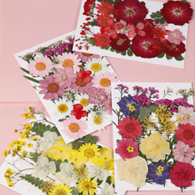 1lot Mix style Beautiful Real Pressed Flower Dried Flowers for Art Craft Epoxy Resin Jewelry Making  Mold Filling