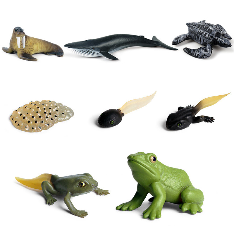 Hot Sale Classic Animals Growth Cycle Model Simulation Hen Ant Mosquito Action Figures Figurine Lovely Baby Educational Kids Toy