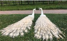 a pair of  real life peacocks model foam&feather white peacocks bird gift about 120cm XD0064 new simulation white bird model foam