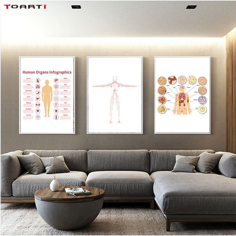 Organs Infographics Prints Posters Heart, Blood Vessel Canvas Painting on The Wall Simple Line Art Pictures for Home Decor image