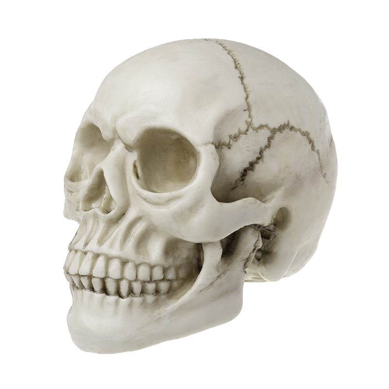 Resin Art Human Skull Replica Teaching Model Medical Realistic 1:1 Adult Size Halloween Coffee Bars Ornament