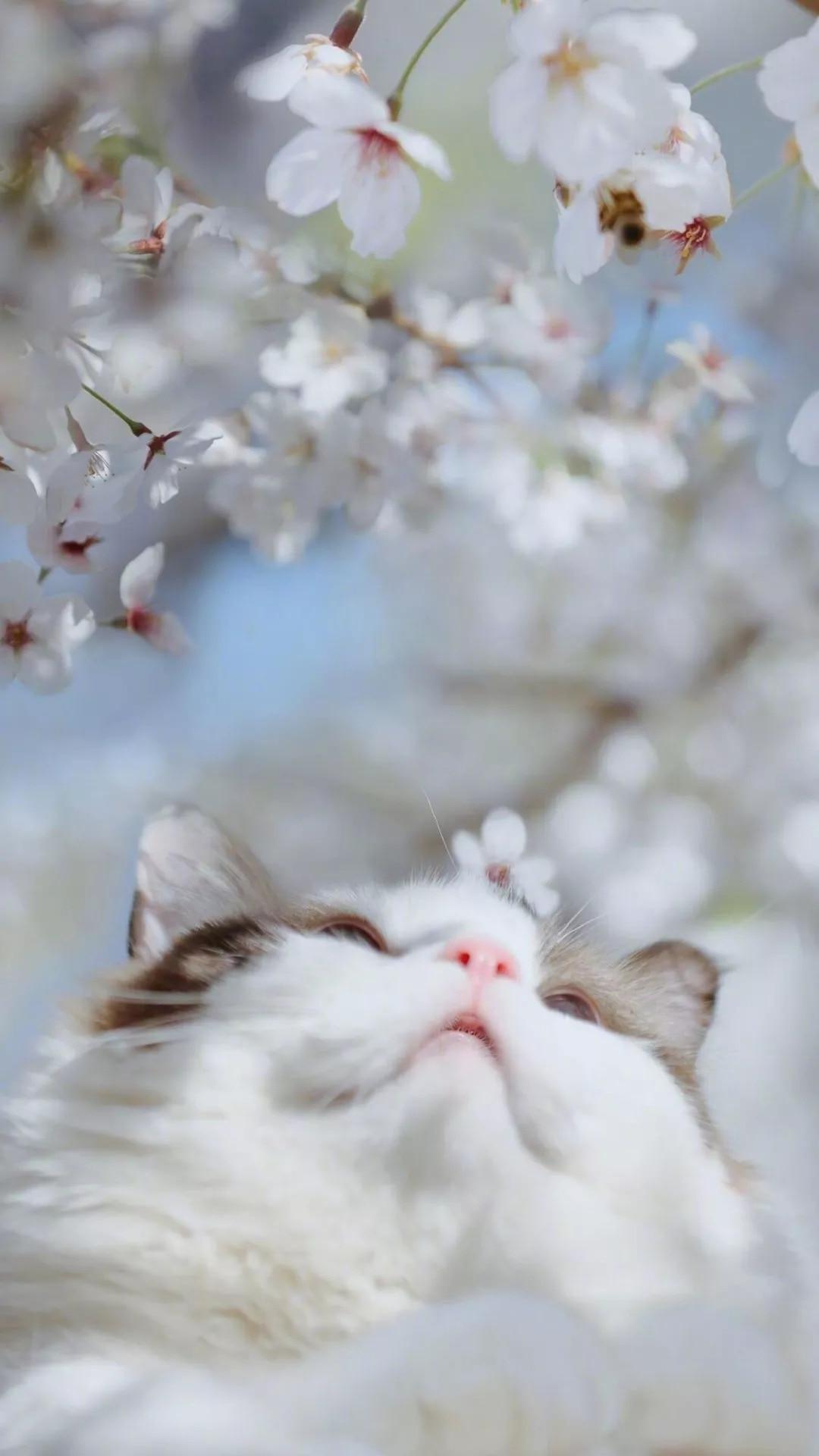 猫片壁纸 :生活不断拍打我们的脸皮,最后不是脸皮厚了,是肿了!插图79