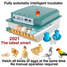 egg incubator brooding incubator automatic egg incubator brooding machine chick incubator home incubator controller farm 36 Eggs