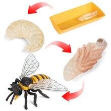 Simulação animais vespa abelha crescimento ciclo modelo figuras de ação estatueta bebê cognição educacional crianças brinquedos presentes natal