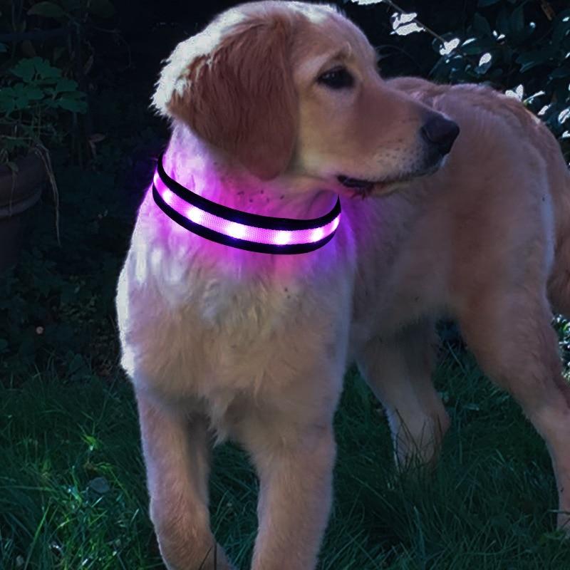 Strip 8 Color Light Belt Pet Supplies USB Charging LED Luminous Dog Collar