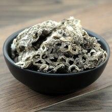 Nidus vespae favo de mel polistes olivaceousdegeer fengfang